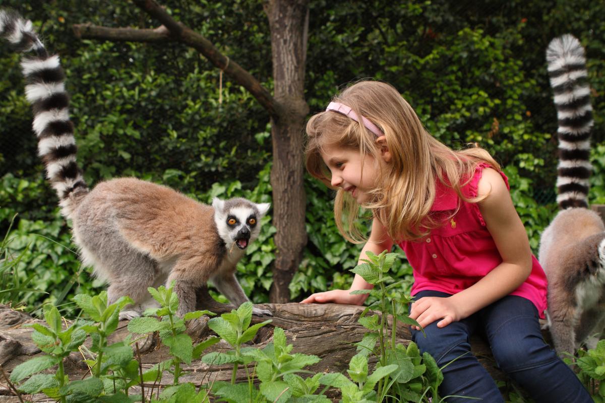 Zoo Di Pistoia Informazioni Per La Visita